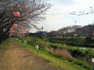 黒目川の桜並木